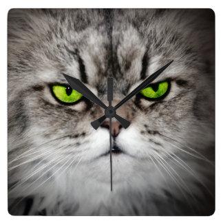 Gato serio con los ojos verdes reloj