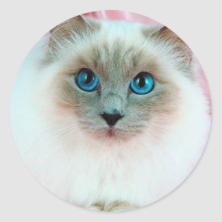 Gato siamés adorable 1 pegatina redonda