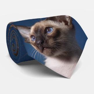 Gato siamés con los ojos azules corbatas