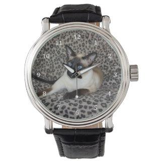 Gato siamés con los puntos del animal salvaje del relojes de mano