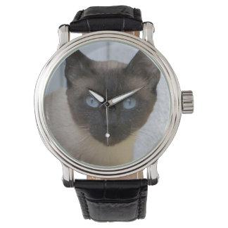 Gato siamés del punto hermoso del sello relojes