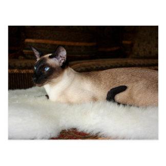 Gato siamés elegante tarjeta postal
