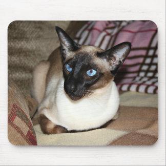 Gato siamés en el sofá alfombrilla de ratones