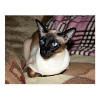 Gato siamés en el sofá postales