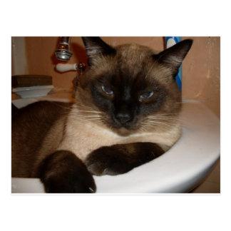 Gato siamés en postal del fregadero