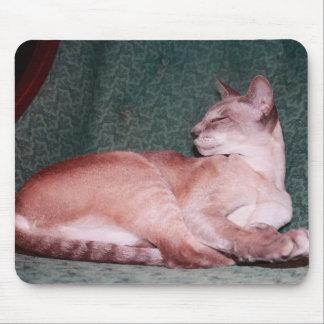 Gato siamés en silla del trullo tapete de ratones