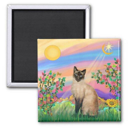 Gato siamés - estrella del día imanes de nevera
