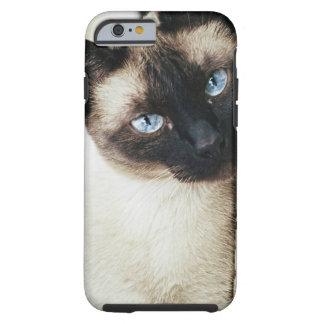 Gato siamés funda para iPhone 6 tough