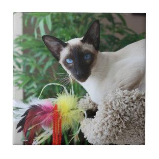 Gato siamés hermoso que juega con el juguete azulejo cuadrado pequeño