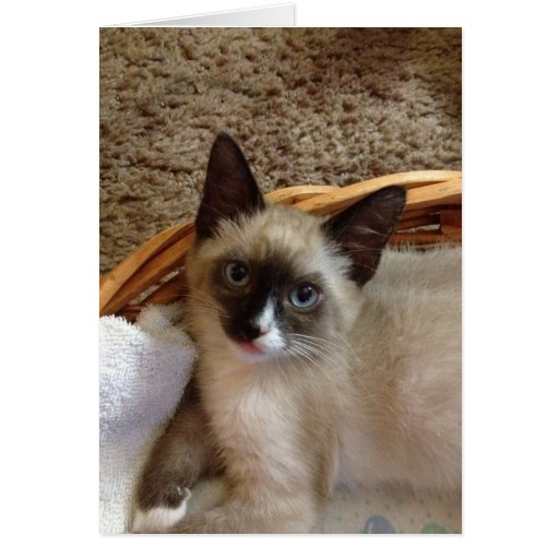 Gato siamés lindo tarjeta