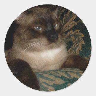 Gato siamés pegatina redonda