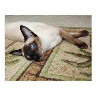 Gato siamés perezoso tarjetas postales