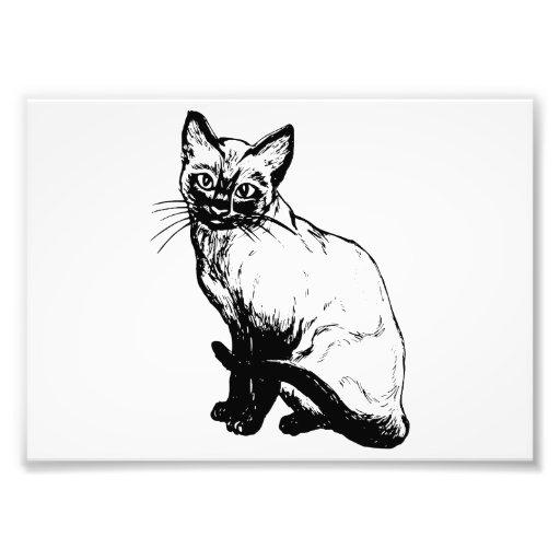 Gato siamés impresión fotográfica