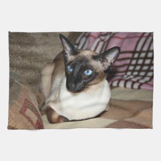 Gato siamés que se relaja en el sofá toallas de mano