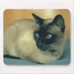 Gato siamés tapetes de ratón