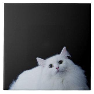 Gato siberiano azulejo cuadrado grande