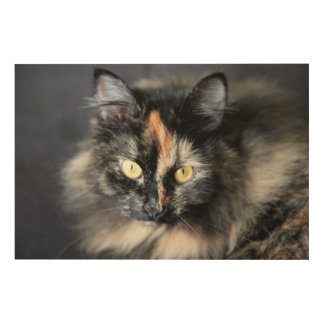 Gato siberiano cuadros de madera