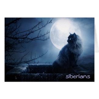 Gato siberiano intrigante en la noche tarjeta pequeña