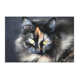 Gato siberiano lienzo envuelto para galerías