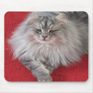 Gato siberiano Mousepad