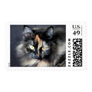 Gato siberiano sello