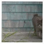 Gato sin la cola azulejo ceramica
