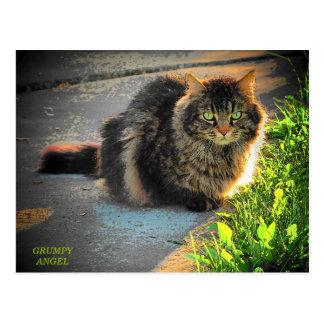 Gato soleado y frío del gatito tarjetas postales