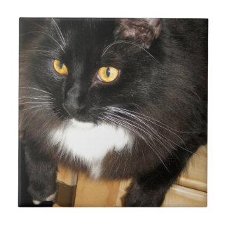 Gato solitario que se encarama en una tabla, fotog azulejo cuadrado pequeño