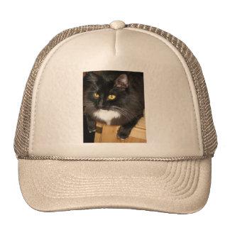 Gato solitario que se encarama en una tabla, fotog gorras