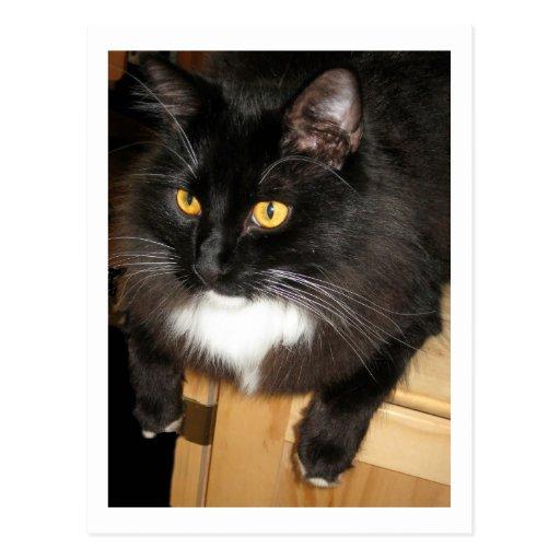Gato solitario que se encarama en una tabla, fotog postales