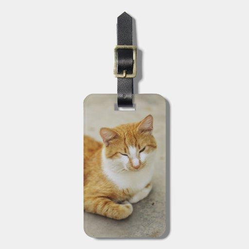 Gato soñoliento etiqueta de equipaje