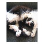 gato soñoliento tonto plantillas de membrete