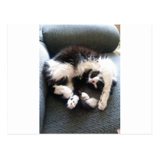gato soñoliento tonto postales
