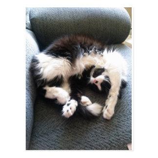 gato soñoliento tonto tarjeta postal