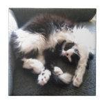 gato soñoliento tonto teja  ceramica
