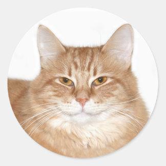 Gato sonriente presumido pegatina redonda