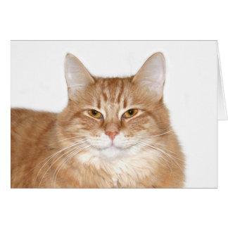 Gato sonriente presumido tarjeta de felicitación