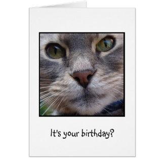 ¿Gato sorprendido, es su cumpleaños? Tarjeta De Felicitación
