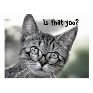 Gato sorprendido lindo con la postal de los