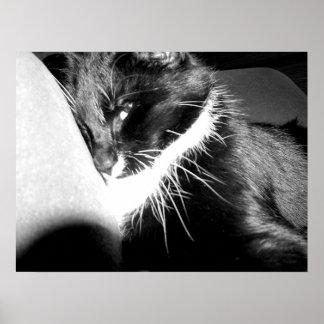 gato sospechoso póster