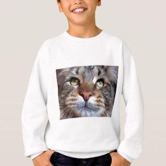 gato sudadera