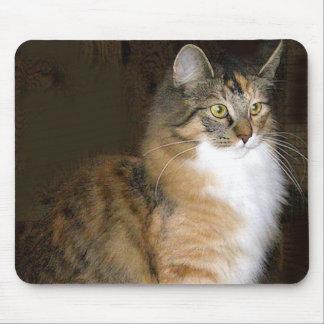 gato tapetes de ratón