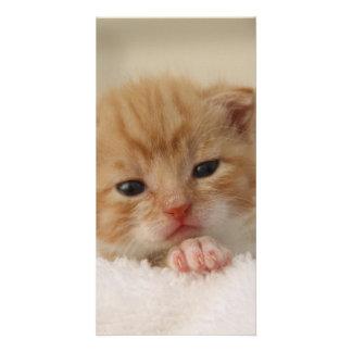 gato tarjeta con foto personalizada