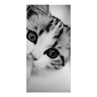 gato tarjetas fotograficas