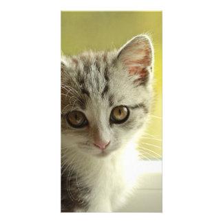 gato tarjetas personales con fotos