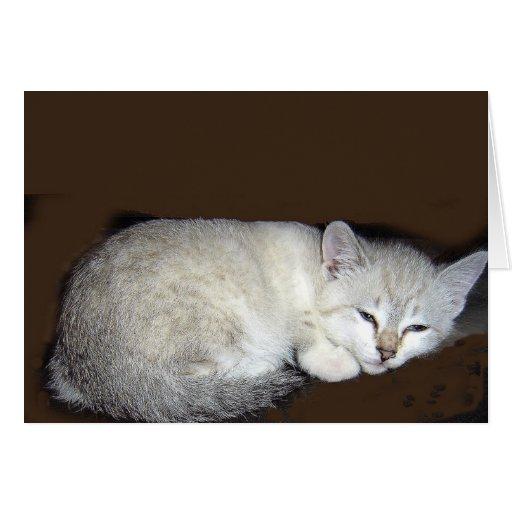 gato tarjeton
