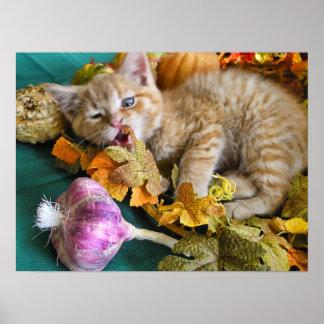 Gato torpe del Veggie, ojo del gatito del gatito d Impresiones
