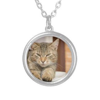 Gato travieso collar plateado