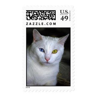 Gato turco del angora con franqueo unido mal de timbre postal