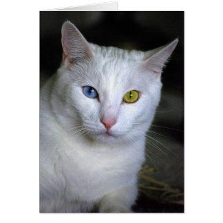 Gato turco del angora con los ojos unidos mal tarjeta de felicitación